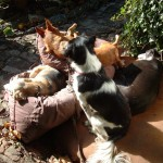 Honden - Loki, Mannaz, Fabio en Grace