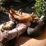 Honden - Loki, Mannaz en Grace