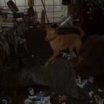 Honden - Ninio en Mannaz 02