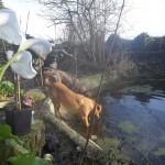 Honden - Ninio en Mannaz 03