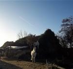 Paard (4)