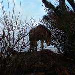Paard (5)