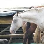 Paard - Fewbe