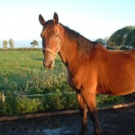 Paard - Lars 01
