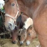 Paard - Lars 03