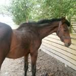 Paard - Lars - 07