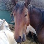 Paard - Norir 02