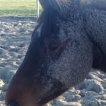 Paard - Norir 03