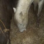 Paard - Puck 02
