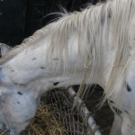 Paard - Puck (2)