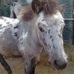 Paard - Vrij