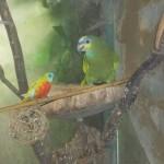 Vogels (3)