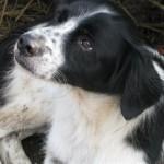 Hond - Fabio (3)