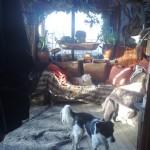 Hond - Fabio en Bobby