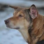 Hond-Maya 01
