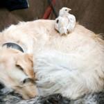 Hond - Sara  en Grobbe 01