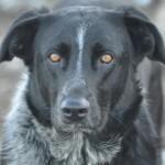 Hond-teefje-Jura