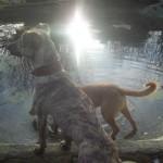Honden - Ninio en Mannaz 01