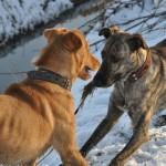 Honden-isMannaz-Fabio