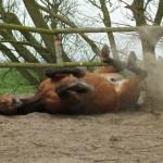 Paard (14)