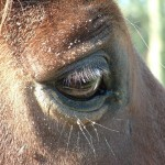 Paard (6)