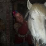 Paard - Claudi 03