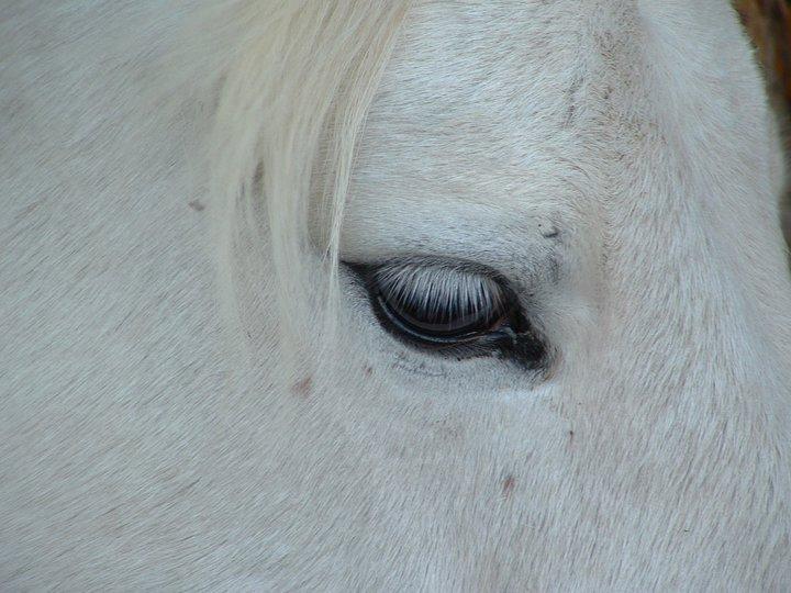 Paard - Claudi 04