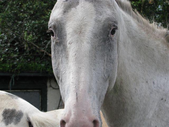 Paard - Fewbe1