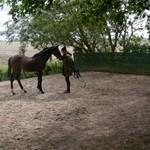 Paard - Norir 04