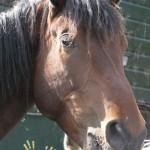 Paard- Norir