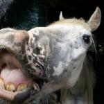 Paard - Puck, blij