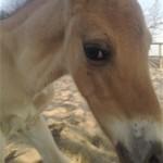 Paard - Skeald