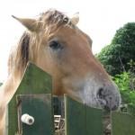 Paard - Skealt
