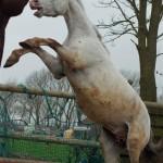 Paarden - Lars en Fewbe