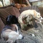 Honden - Loki, Fabio enz.