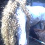 Paard (16)