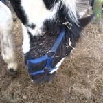 Paard (2)
