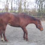 Paard (3)