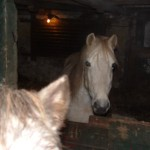 Paard (7)