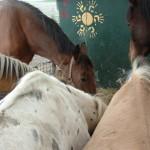Paard - Lars 05 (achteraan)