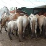 Paard - Lars 06 (achteraan)