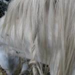 Paard - Puck met vlechtjes (door Selsa)