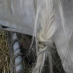 Paard - Puck met vlechtjes (door Selsa) 2