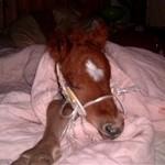 Paard - Yzir (1)