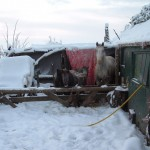 Paard - sneeuw (12-2010)