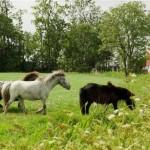 Paarden (23)