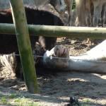 Paarden (4)