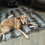 Hond-Maya
