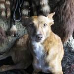Hond - Quitta