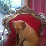 Hond - Sara 08